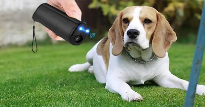 Best Ultrasonic Dog Repeller Reviews 2021 - Top 10 Picks