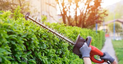 Best Gas Hedge Trimmers Reviews - Top 6 Models ([thang]-[nam] Updated)