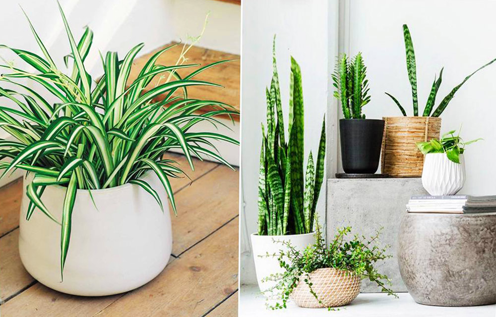 Grow Plants that Absorb Humidity